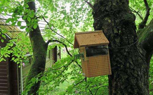 The bird box behind Hooting Lodge