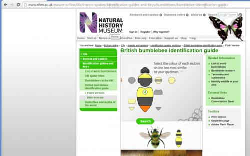 The interactive key on The Natural History Museum website