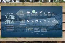 Scottish Wildlife Snapshot