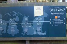 What future for the Scottish Wildcat?