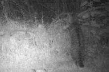 cat 1 - 20 June 2011