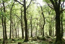 Ariundle Oakwoods is a National Nature Reserve
