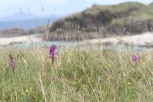 The Machair above Bay MacNeil near Ardnamurchan Point
