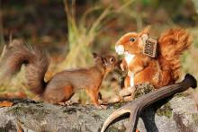 Living Nature Red Squirrel Soft Toy - Large