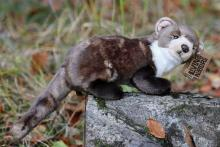 Living Nature Pine Marten Soft Toy